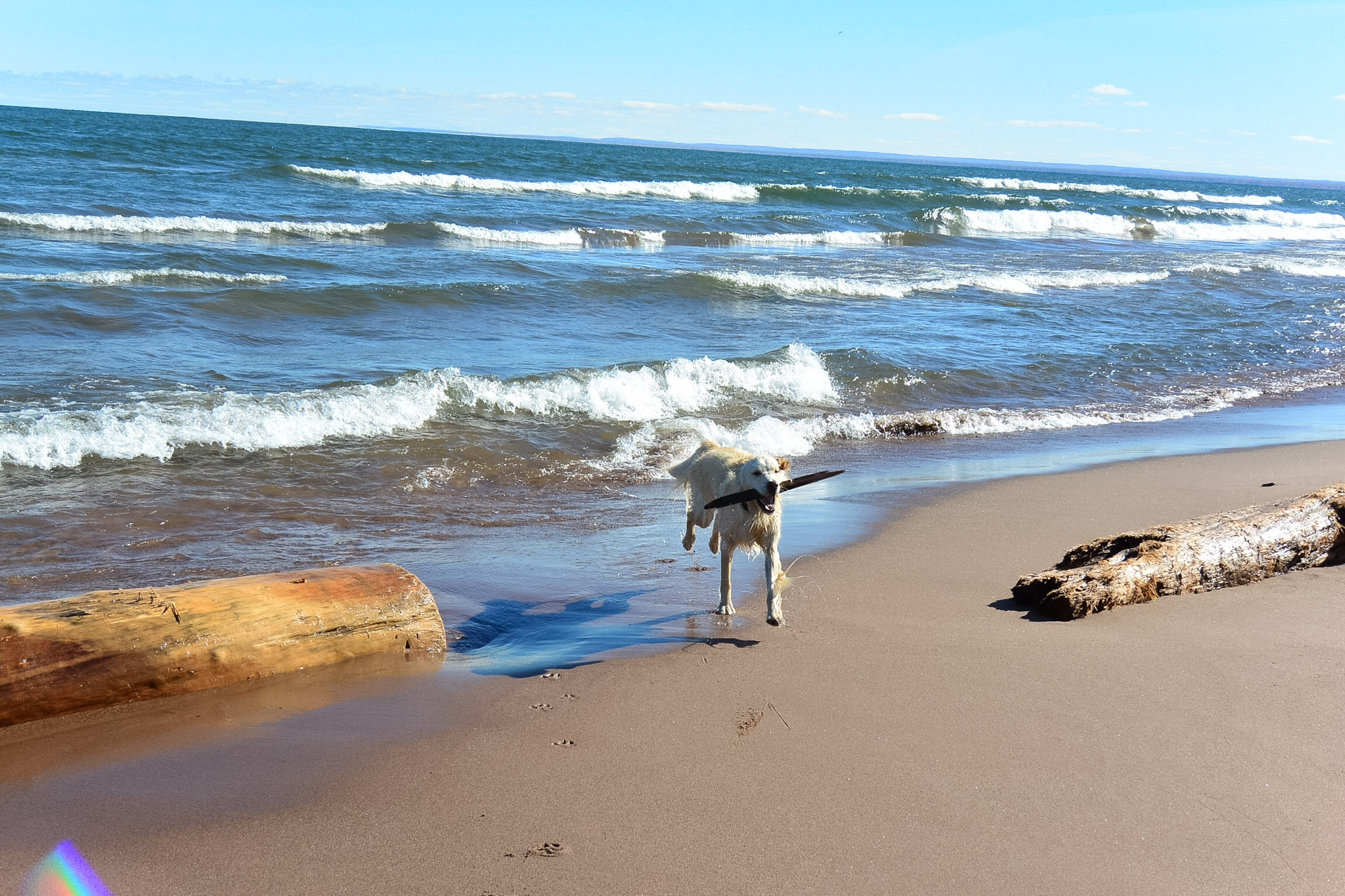 Kenai playing fetch by Lake Superior