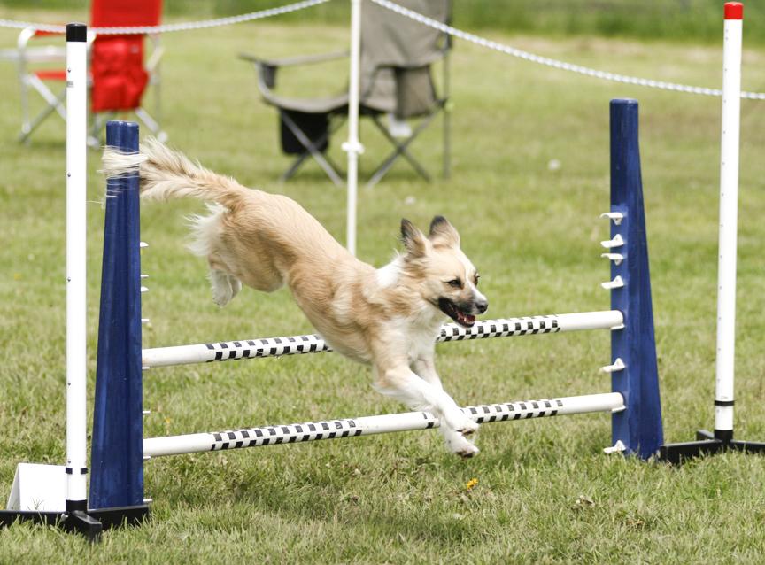 Dog Training Duluth Mn