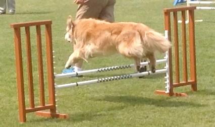Arrowhead Dog Training